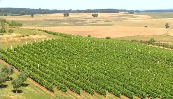 Herbicida é usado nas lavouras de soja, para controlar invasora. Porém, vento pode carregá-lo, atingindo culturas que acabam prejudicadas — Foto: Reprodução/RBS TV