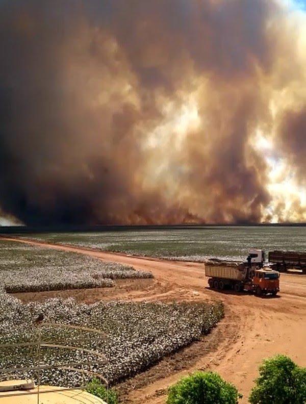 Incêndio atinge lavoura de milho — Foto: Divulgação