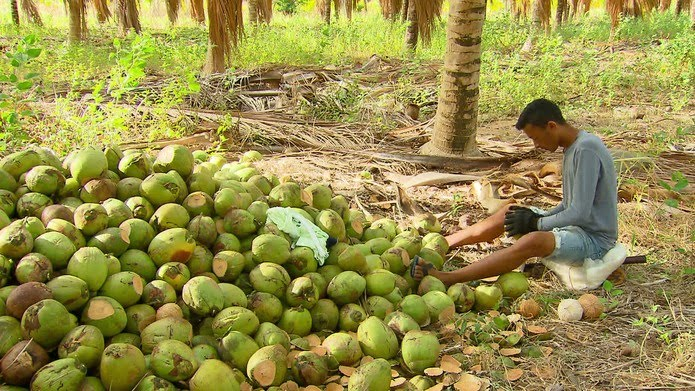Gleisson trabalha na roça descascando coco — Foto: Reprodução/TV Globo