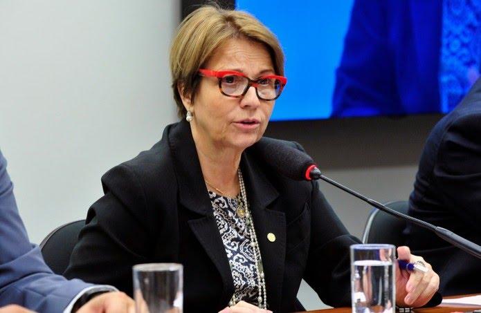 A deputada Tereza Cristina (DEM-MS), futura ministra da Agricultura — Foto: Luis Macedo / Câmara dos Deputados