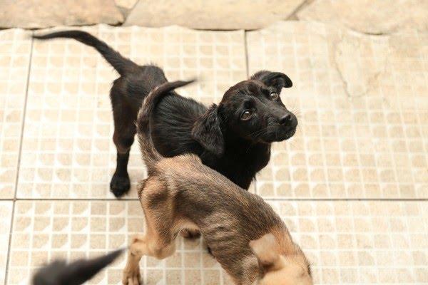 Mulher é multada em R$ 15 mil por maus-tratos a cachorros em Caraguatatuba — Foto: Divulgação / Polícia Militar Ambiental