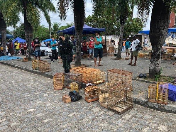 Operação da Polícia Ambiental resgata 179 aves silvestres em Guarabira, PB — Foto: Polícia Militar/Divulgação