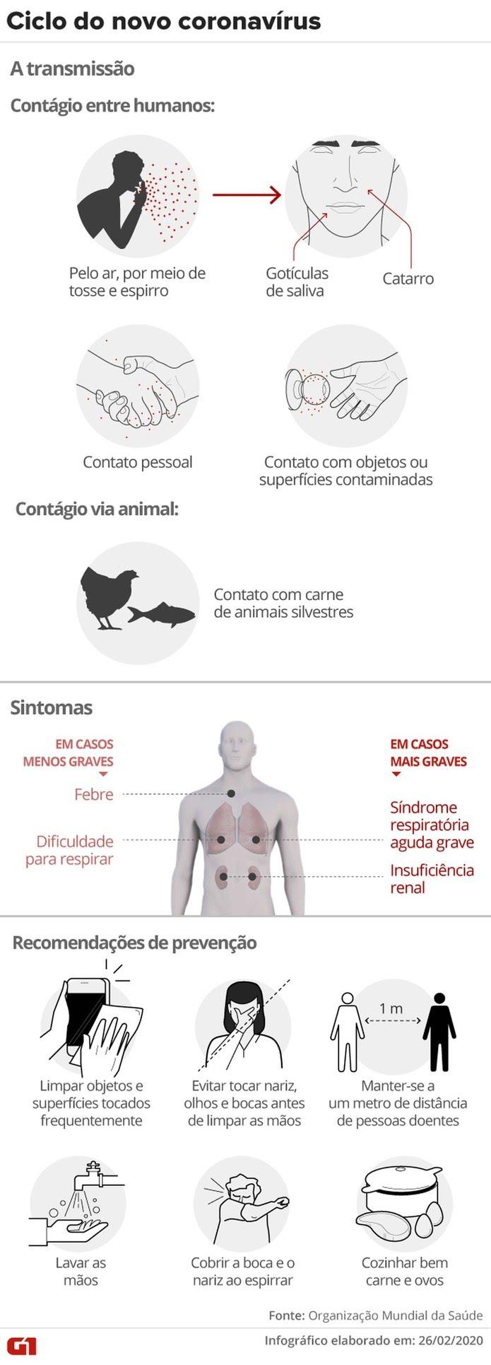 Ciclo do coronavírus — Foto: Foto: Arte/G1