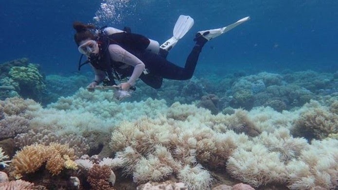 Branqueamento de corais ocorre por aumento de temperatura do oceano e é intensificado pelo aquecimento global — Foto: ARC Centre of Excellence for Coral Reef Studies