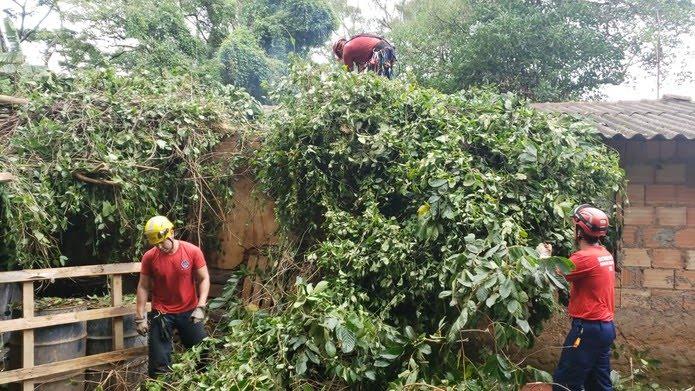 Árvore caiu sobre casa no bairro Taquaril, na Região Leste de Belo Horizonte — Foto: Vladmir Vilaça/TV Globo