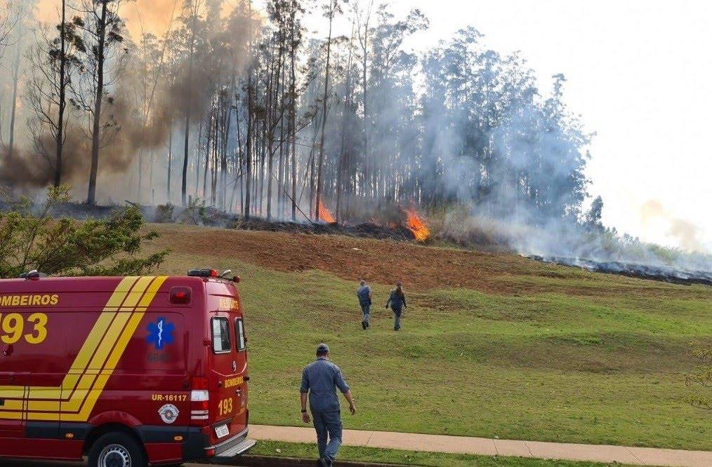 Avião caiu em área de mata logo após decolar do aeroporto de Piracicaba (SP) (Foto: Corpo de Bombeiros/Divulgação)